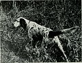 The American hunting dog - modern strains of bird dogs and hounds, and their field training (1919) (18148930215).jpg