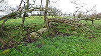 The Bronze Age cairn at Cairnduff Hill, Stewarton, East Ayrshire, Scotland. Curb stones, etc.jpg