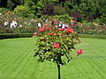 The Butchart Gardens (Rose Garden) (16.08.06) - panoramio - sergfokin (3).jpg
