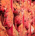 The Red Wall (24382012423).jpg