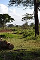 The Serengeti from the Voyager Ziwani Safari Camp, on the edge of the Tsavo West National Park, near Ziwani, Kenya 2.jpg