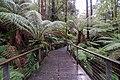 The Treetop Walk (19199627948).jpg