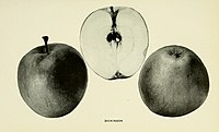 The apples of New York (1905) (19750677571).jpg