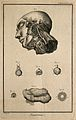 The arteries of the head after Haller; the eye, after Ruysch Wellcome V0007828ER.jpg