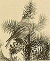The birds' calendar (1894) (14770272443).jpg