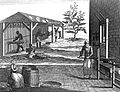 The manufacture of tobacco with leaves being sorted, dried, Wellcome L0017403.jpg