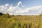 Three Creeks - Prairie in Ohio 1.jpg