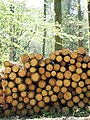 Timber awaiting Collection in Spearywell Wood - geograph.org.uk - 424288.jpg