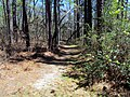 Trail Weymouth Woods SP 1849 (5607342470) (2).jpg