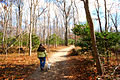 Trail at Westmoreland State Park winter time (15735007862).jpg