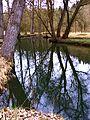 Trees - panoramio (31).jpg