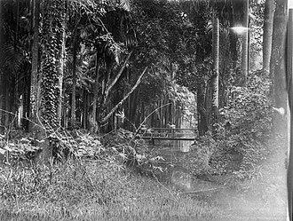 Garden of Palms - Image: Tropenmuseum Royal Tropical Institute Objectnumber 60008852 De Palmentuin acher het Gouvernements
