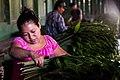 USAID Measuring Impact Conservation Enterprise Retrospective (Guatemala; Rainforest Alliance) (40259633322).jpg