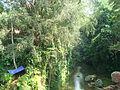 Ubud landscape2.JPG