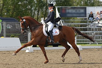 Dressage - An upper-level dressage horse at the extended trot also in false frame and false collection. Note the mismatched angles of the front and rear elevated legs. This is an example of modern dressage which leaves behind the building blocks and seeks only to present a flashy horse with no true collection, roundness, softness, balance or rhythm.
