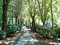Un paseo por el Campo del Moro.jpg