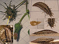 Unknown critter 20060930.jpg