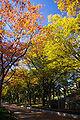UtsuboPark-autumn01.jpg