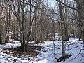 Val Fegana - Bosco in inverno - panoramio.jpg