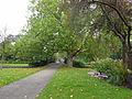 Van Bergen IJzendoornpark in Gouda 01 Zicht op de brug.jpg