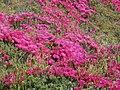 Van Damme, State Park - 3543302201.jpg