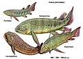 Various Porolepiformes.jpg