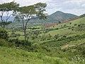 Vegetação típica do Agreste Pernambucano localizado no município de Passira - PE- Brasil.jpg