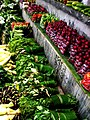 Vegetables seen at Tamenglong Market.jpg