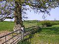 Venerable tree - geograph.org.uk - 451071.jpg