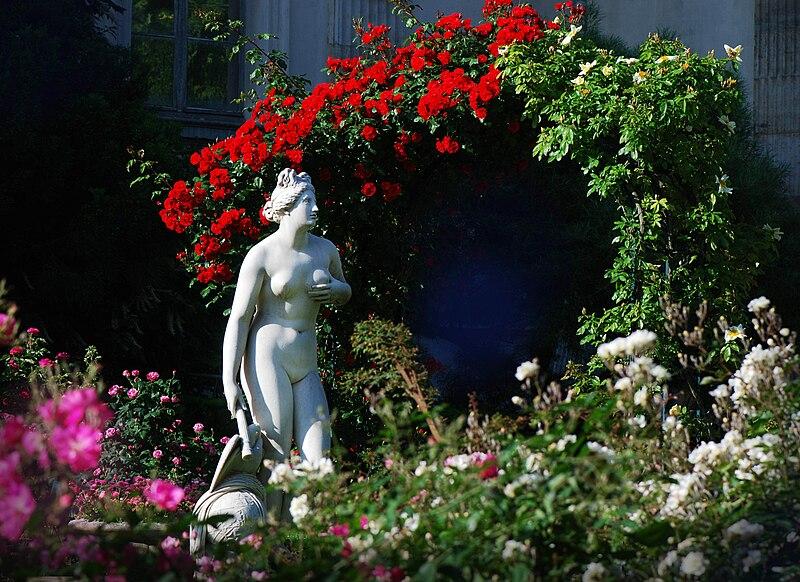 Fichier:Venus genitrice roseraie jd plt.jpg