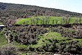 Vergina, Greece - panoramio - Robert Helvie.jpg