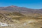 Vicuñas (Vicugna vicugna) en Reserva Nacional Salinas, Arequipa, Perú, 2015-08-02, DD 61.JPG