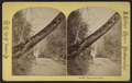 View from below foot of Stairs, by J. Robert Moore.png