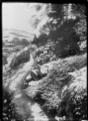 View of the Dunedin Botanic Garden after a snowfall ATLIB 294722.png