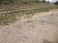 Vila romana de Liédena 20170809 131835.jpg