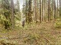 Votkinsky District, Udmurt Republic, Russia - panoramio (33).jpg