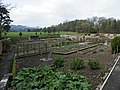 Walled garden at Chipchase Castle - geograph.org.uk - 1255535.jpg