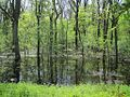 Wapanocca National Wildlife Refuge Crittenden County AR 016.jpg