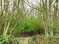 Weldon Park 3.jpg