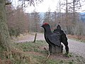 Welsh Black Grouse Structure on Path Junction - geograph.org.uk - 1095552.jpg