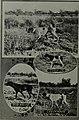 Western field (1905) (14798597863).jpg