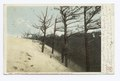 Where Great Sand Dunes Envelop Forest, Cape Henry, Va (NYPL b12647398-68186).tiff