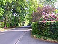 Whinwhistle Road, East Wellow - geograph.org.uk - 425963.jpg