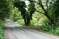 White Down Road, Abinger Roughs - geograph.org.uk - 1509121.jpg