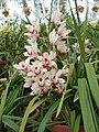 White Flowers 2.jpg