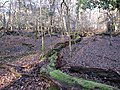 Whitley Wood - geograph.org.uk - 1660757.jpg