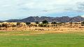 Widoki mongolskiego krajobrazu widziane z minibusa Karakorum - Ułan Bator (08).jpg