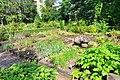 Wikipedia 13. Fotoworkshop Botanischer Garten Erlangen 2013 by-RaBoe 029.jpg