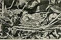 Wild nature's ways (1903) (14748353364).jpg