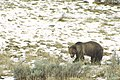 Wildlife38 (25210516208).jpg